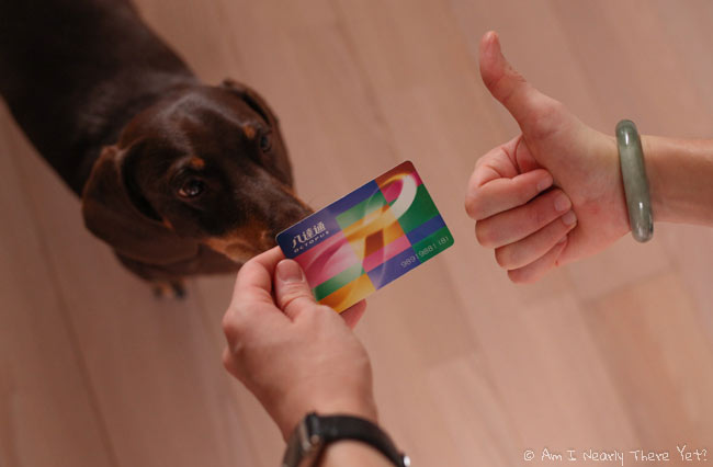 Milo the sausage dog sniffing our Octopus Card!