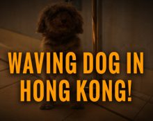 waving dog in Hong Kong