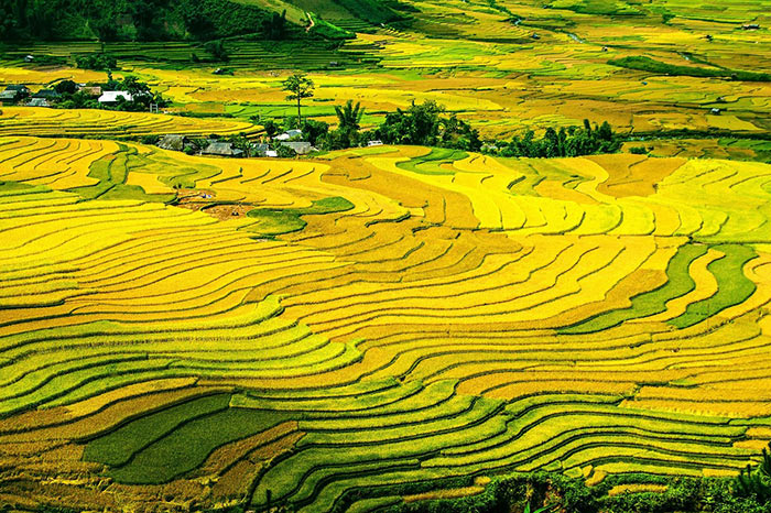 Tied rice paddies in China