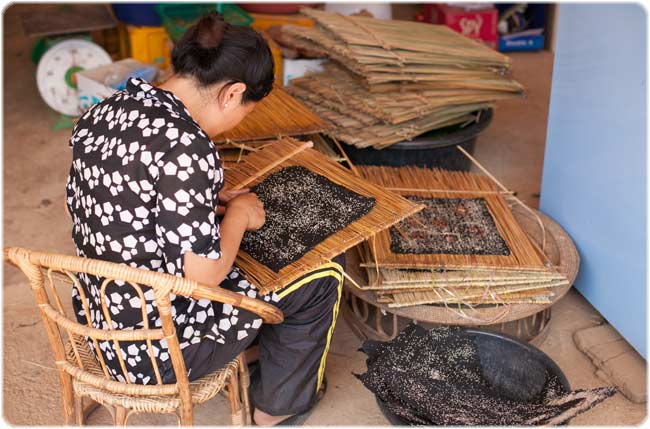Kai Pen being carefully removed from its bamboo frame