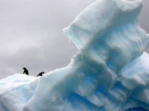 penguin antarctic
