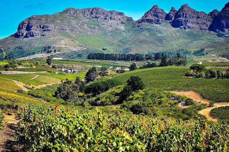 bordaux vineyard