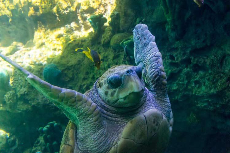 turtle hifive